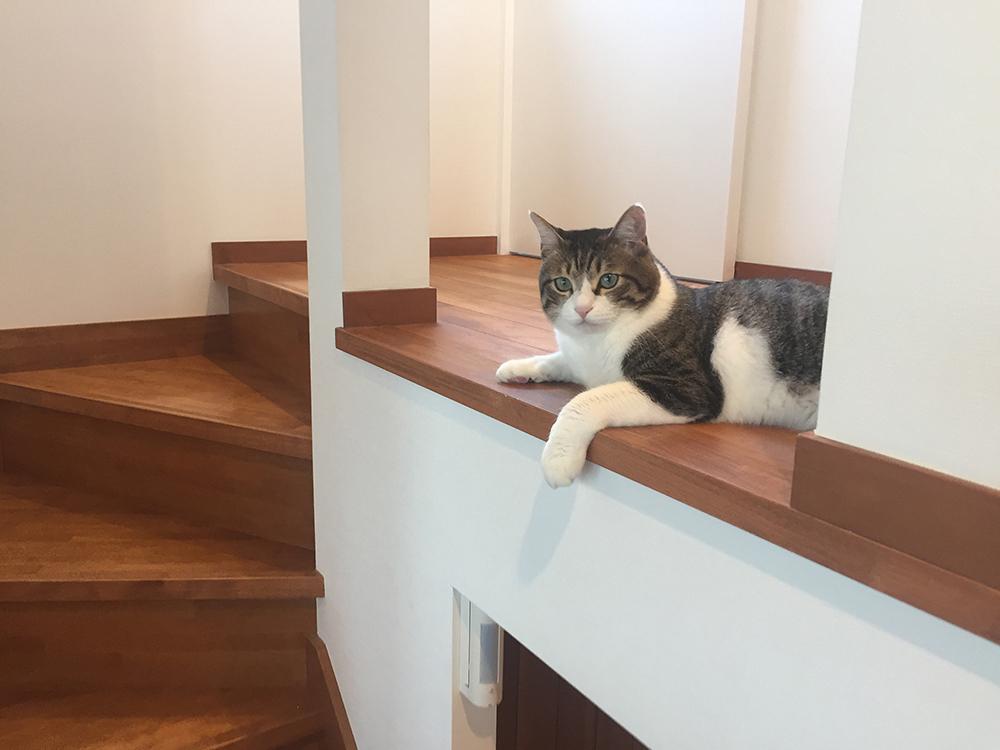 愛猫にもお気に入りの場所があるそうです。